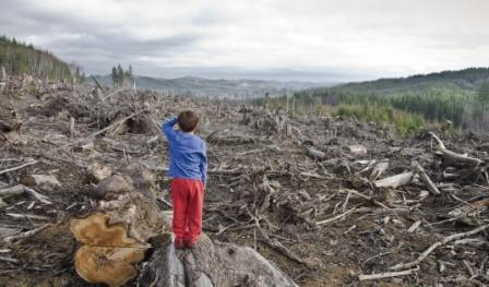 Вырубленный лес