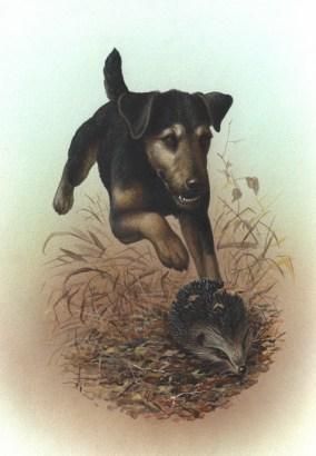 Басня : пёс и ёж